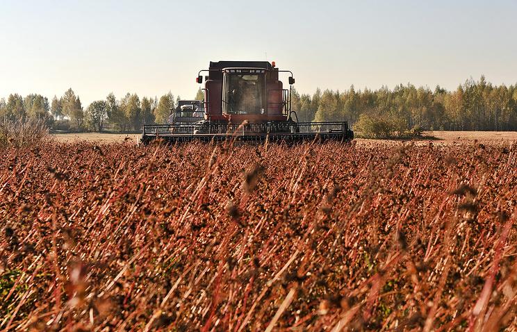 Гречиха посевная выращивание 65