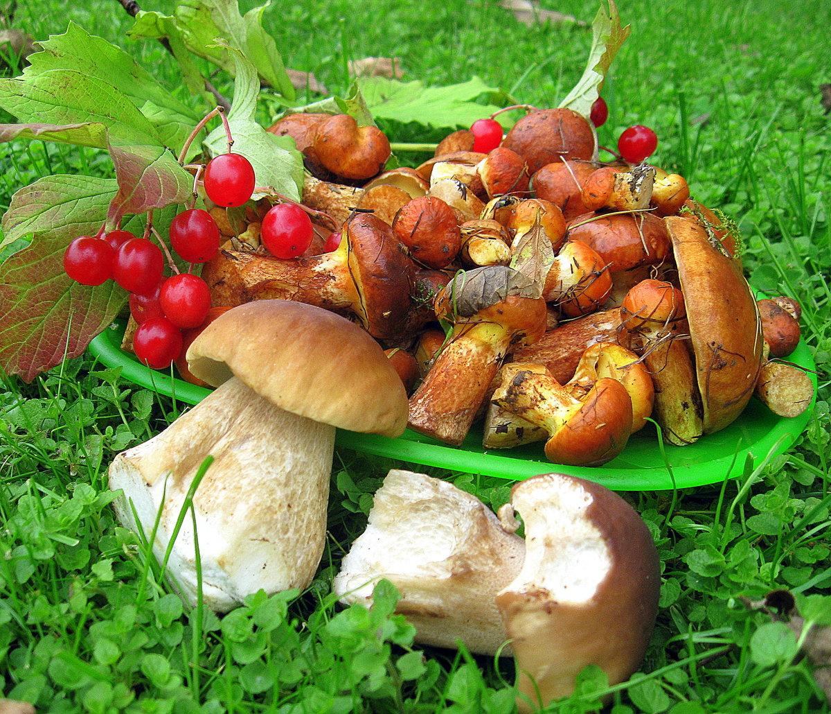Прикольные, картинки собирать грибы и ягоды